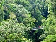 Aerial view of hanging bridge surounded by rainforest