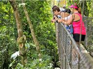 A slow embracing a tree trunk and tourists who appreciate it from a suspension bridge in the forest